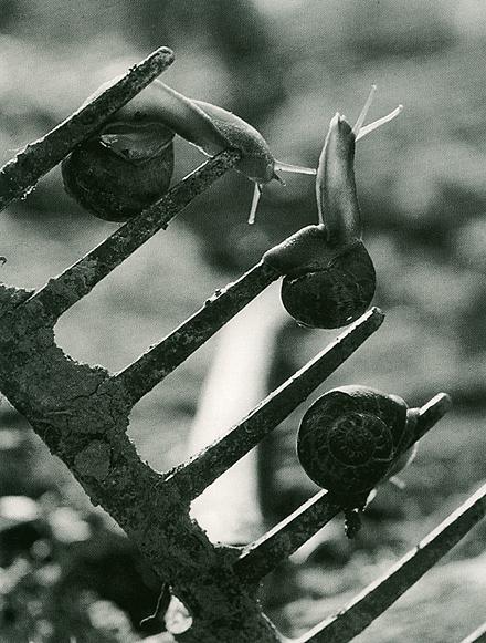 http://www.galerie-photo.com/images/jean-dieuzaide-estocade-1954.jpg